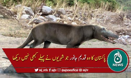 پاکستان کا وہ قدیم جانور جو دنیا نے کبھی نہیں دیکھا