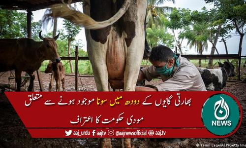 بھارتی گایوں کے دودھ میں سونا نہیں، مودی حکومت کا اعتراف