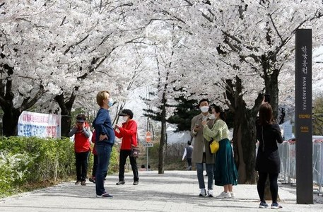 South Korea reports surge in coronavirus cases, more restrictions expected