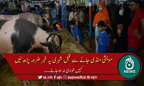مویشی منڈی جانے والوں کیلئے حکومت سندھ کا اہم حکم نامہ جاری
