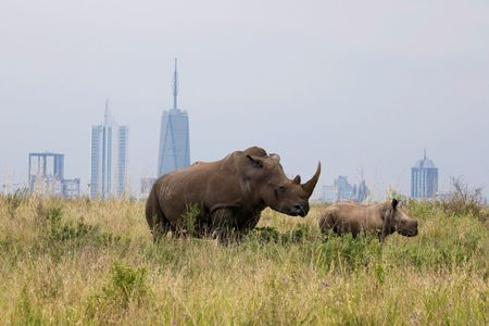 Kenya says black rhino, sable antelope, other species at risk from growing human population