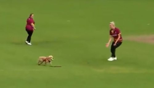 کرکٹ میچ کے دوران کتا گیند منہ میں دباکر بھاگ نکلا، ویڈیو وائرل