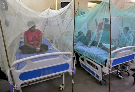Dengue suspected of killing dozens as Indian state suffers worst outbreak in years