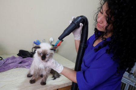 Pets enjoy some pampering in Palestinian clinic