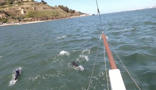 Dolphins return to Lisbon's Tagus river