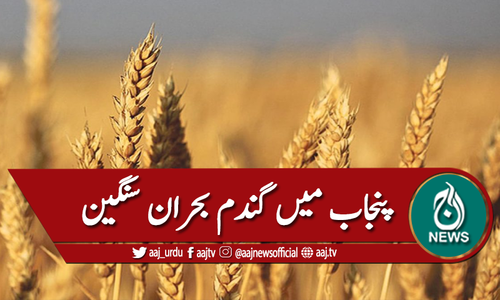 پنجاب میں گندم بحران سنگین