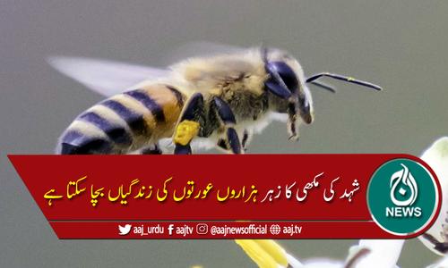 شہد کی مکھی کے زہر میں ایسا کیا ہے؟