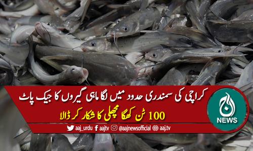 ماہی گیروں کا جیک پاٹ لگ گیا، 100 ٹن کھگا مچھلی کا شکار