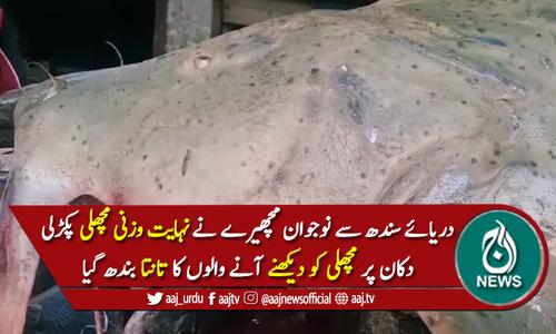 نوجوان مچھیرے نے دریائے سندھ سے نہایت وزنی مچھلی پکڑلی