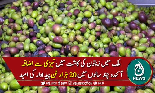 ملک میں زیتون کی کاشت میں تیزی سے اضافہ