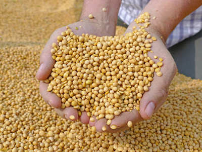 Soybeans rise, hover near 1-1/2 wk low on easing LatAm supply woes