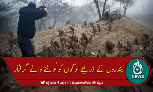 نئی دہلی میں بندروں کے ذریعے لوگوں کو لُوٹنے والے دو افراد گرفتار