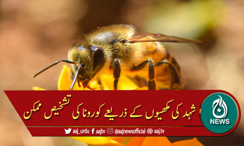 شہد کی مکھیوں کے ذریعے کووڈ 19 کی تشخیص ممکن ہوگئی