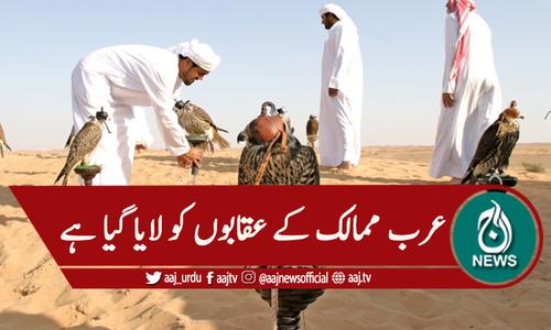 سعودی عرب : بین الاقوامی عقاب میلا شروع