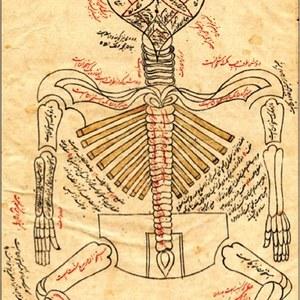 انسانی جسم کی ساخت بیان کرنے والی دنیا کی پہلی نایاب اسلامی کتاب