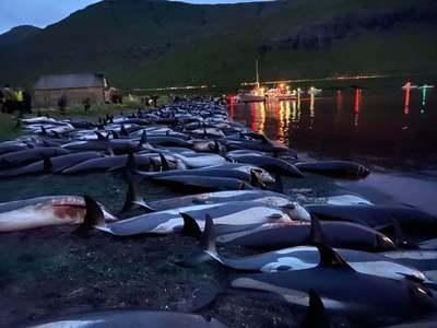ڈنمارک کے جزائر میں 1400 سے زائد ڈولفنز ذبح کردی گئیں