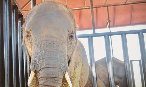 کراچی: جرمن ڈاکٹر سے ہاتھیوں کا طبی معائنہ کرانے کی درخواست منظور