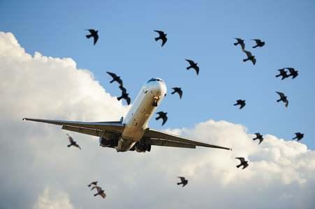 لاہور: استنبول جانے والے طیارے سے پرندہ ٹکرا گیا، جہاز شدید متاثر