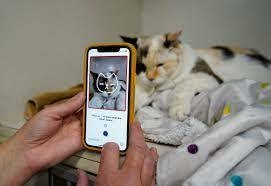 Tably uses the phone's camera to tell whether a feline is feeling pain. Reuters