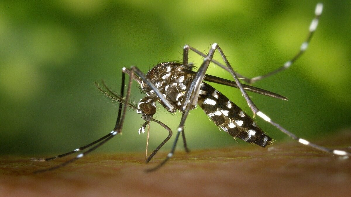 The situation in Punjab is critical and alarming as the number of dengue cases in the province crossed 2,000 mark last week. File photo